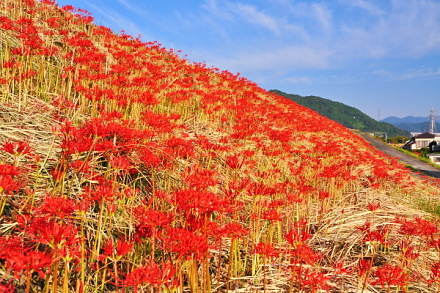 Fuji_higan2014d