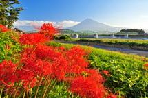 Fuji_higan2014h