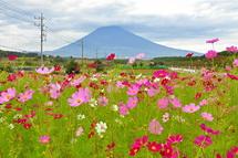 Susono_cosmos2014e