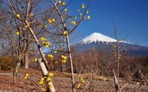 Iwaume20150118g