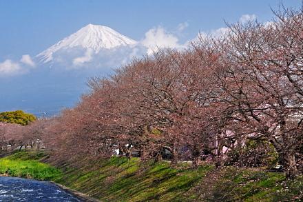 Sakura20150322a