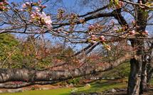 Sakura20150322f