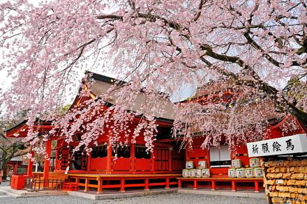 Sengen_shidare2015d