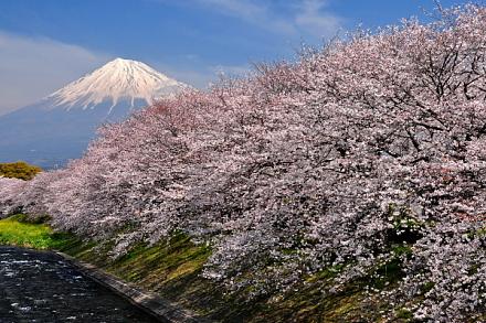 Sakura20150328a