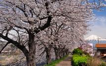 Sakura20150328b