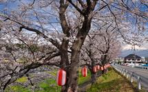 Sakura20150328c