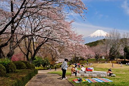 Sakura20150328d