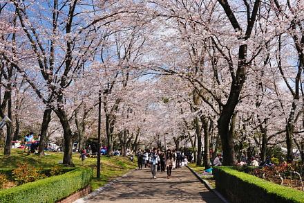Sakura20150328g
