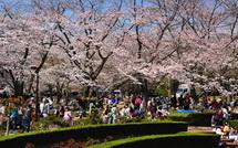 Sakura20150328h
