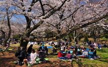 Sakura20150328i