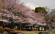 Sakura20150328j