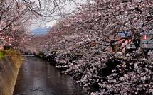 Sakura20150328l