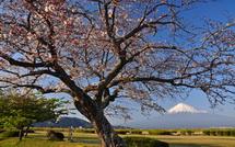 Sakura20150328n