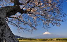 Sakura20150328o