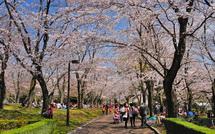 Hiromi_sakurafes2015j