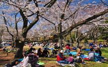 Hiromi_sakurafes2015k