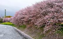 Sakura20150404d