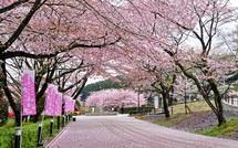 Sakura20150404f