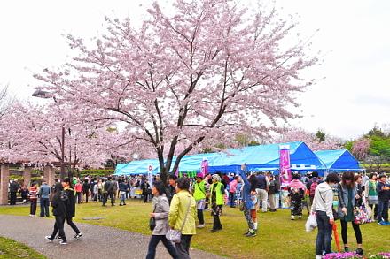 Takasakurafes2015a