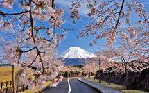 Shinrinboen_sakura02015b