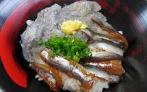 Tago_shirasu2015f