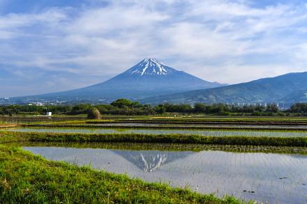 Tanbofuji201505a