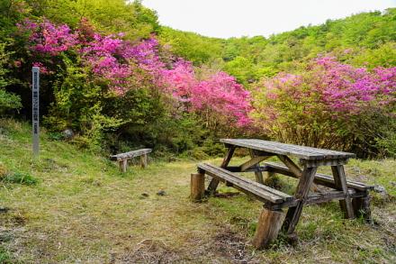 十里木高原別荘地の一角にあるアシタカツツジ原生群落