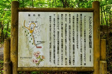 アシタカツツジ原生群落の案内看板