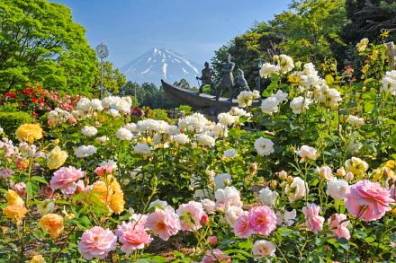 広見公園のバラと富士山の風景
