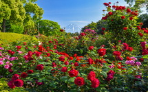 公園中央のバラ花壇越しに見る富士山