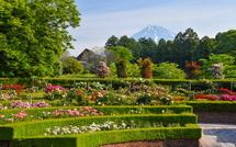 円形花壇のバラと富士山の風景