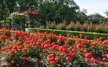 西側園路のバラ花壇