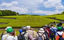 茶娘と富士山を撮る人々