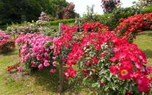 咲き誇るバラの花