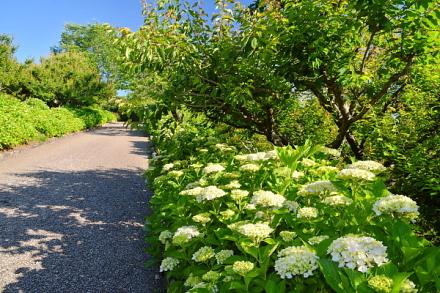 あじさいが咲き始めた岩本山公園