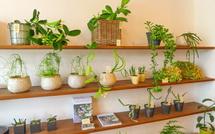 観葉植物等の販売