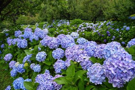 爽やかな青色の花を存分に楽しめる
