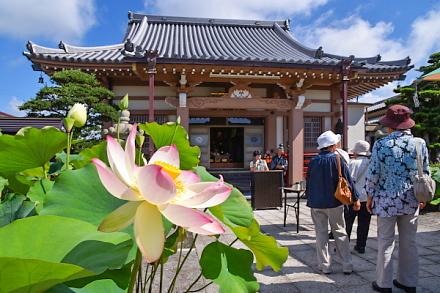 「蓮の華を楽しむ会」開催の代通寺境内