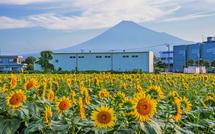 ひまわり畑から富士山をズームアップ