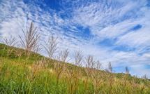 ススキの穂と秋を感じる雲