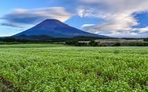 見応えある笠雲の富士山とそば畑の風景