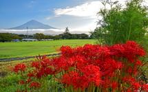 所々で見頃を迎えた彼岸花と富士山の風景