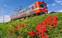 神谷駅西側の彼岸花と岳南電車