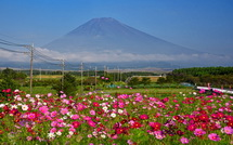 コスモス越しに見る雄大な富士山