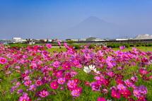 富士山とコラボした風景も楽しめる