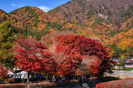 もみじ回廊全景と色付く山々