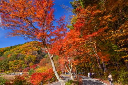 美しい風景を楽しめる紅葉トンネル