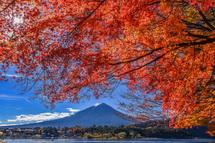 もみじの紅葉と富士山の風景