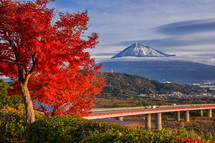 富士川SA下り園地のもみじと富士山の風景