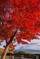 真っ赤に染まったもみじと富士山の風景